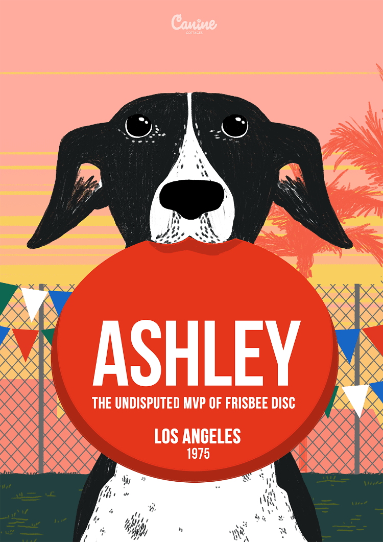 Ashley Whippet - Canine Pioneers