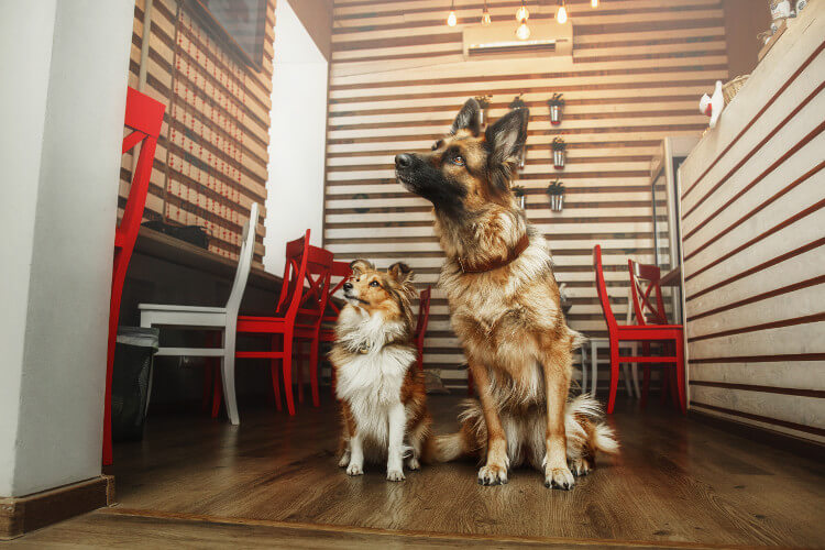 Dogs at a diner