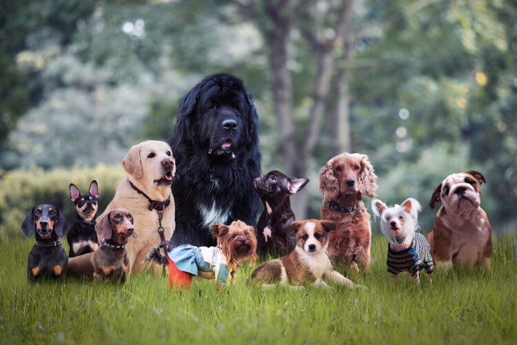 A group of different dog breeds together on a lawn