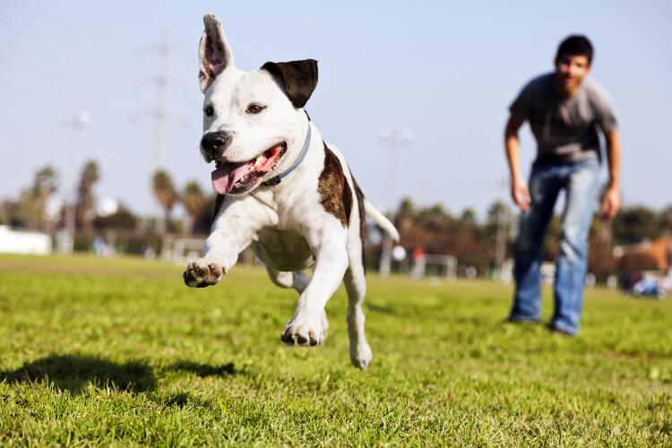 A puppy bounding around on the grass