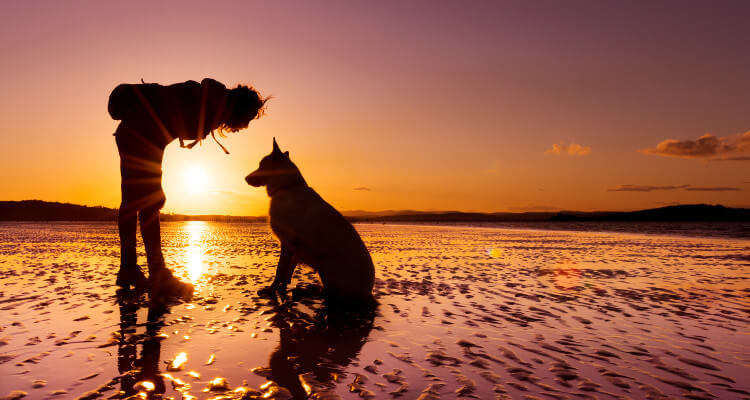 Dog and owner on the beach at sunset