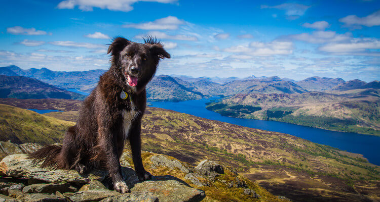 A dog posing on a rocky hill above a valley