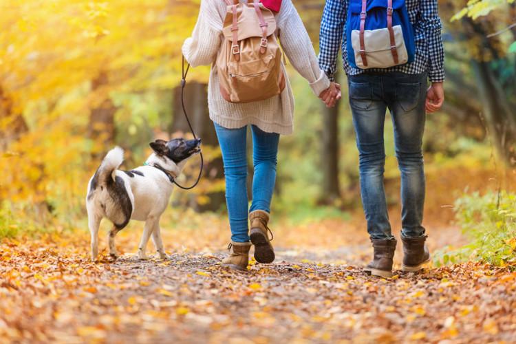 Dog on a walk in Coed y Brenin park, Dolgellau