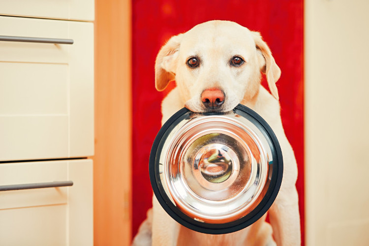 Dog with food bowl waiting for his meal