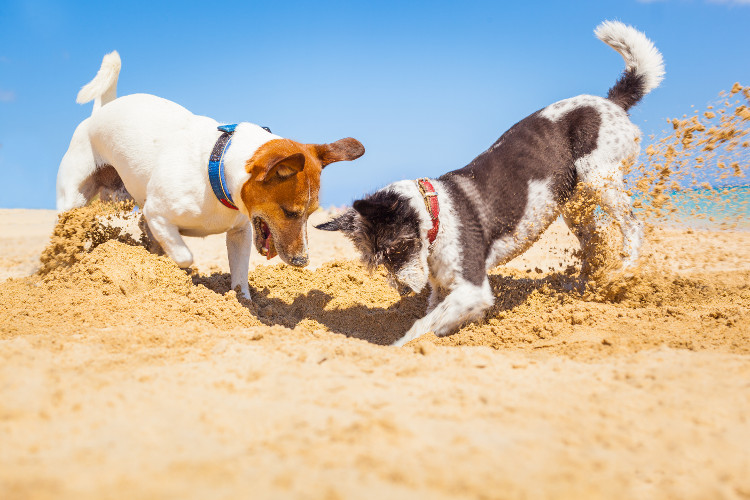 Dog-friendly beaches in South Wales