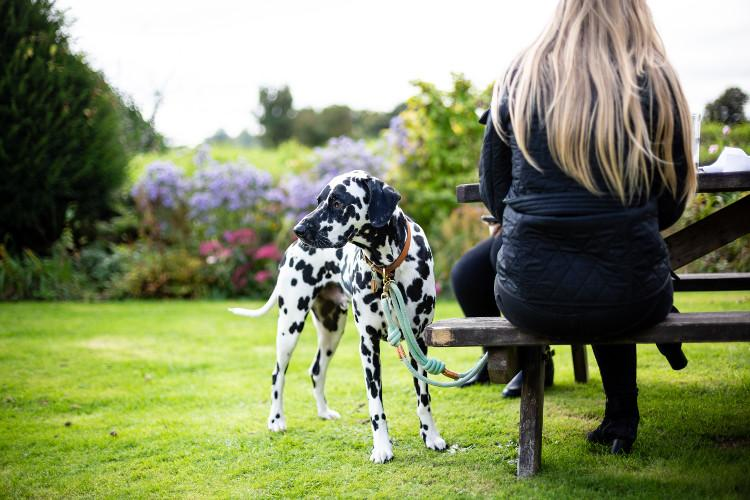 Dog-friendly pubs in South Wales