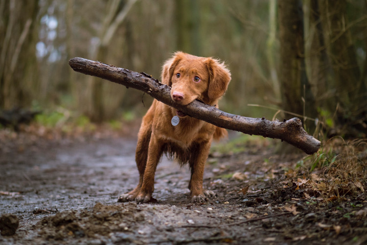 Dog-friendly walks in South Wales