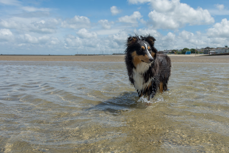 Canine Guide to the Isle of Wight