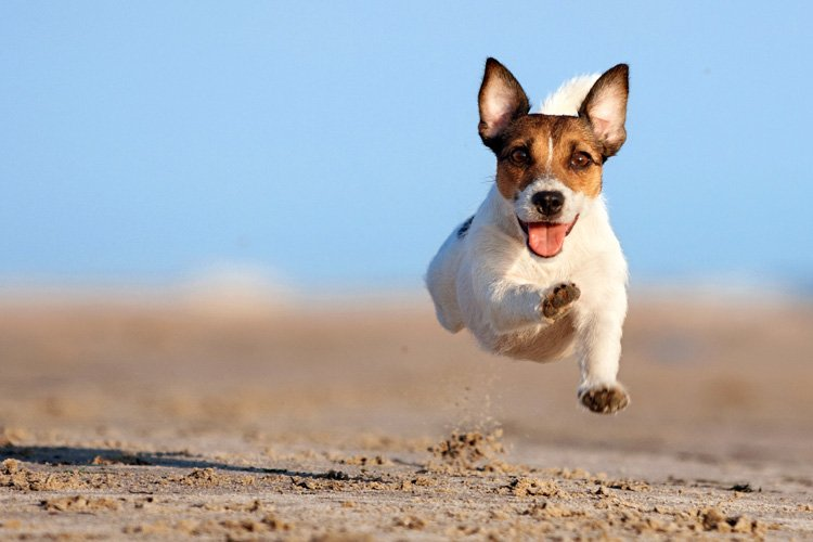 Cornwall's dog-friendly beaches
