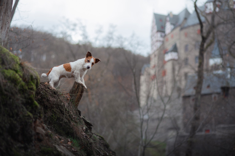 The Canine guide to Edinburgh