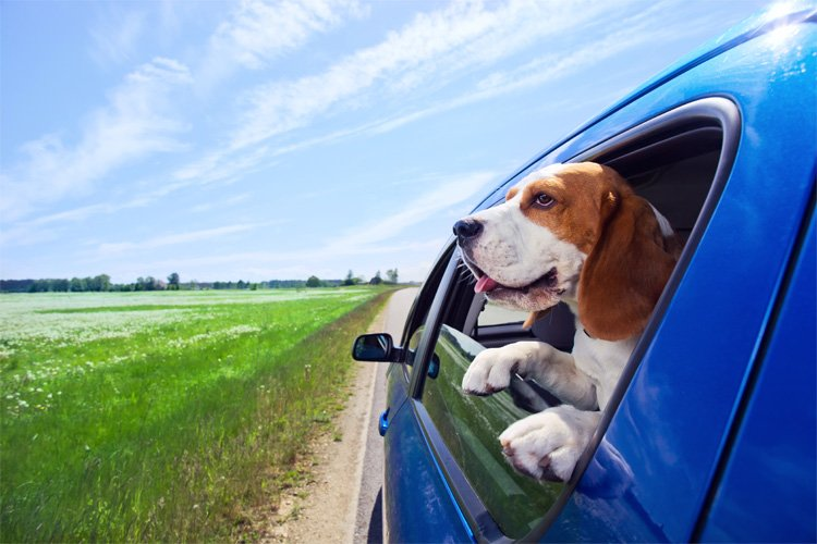 Dog-friendly motorway services and more