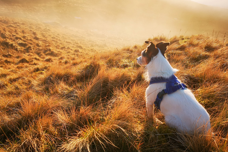 Best dog-friendly attractions in North Wales