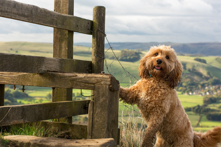 The Canine guide to the Peak District
