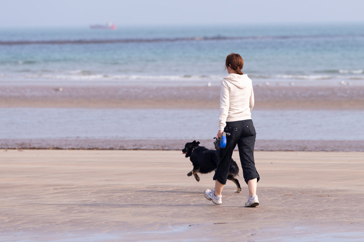 The Canine guide to Bamburgh