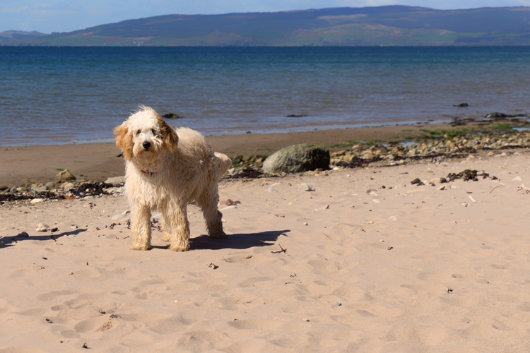 The Canine guide to the Isle of Arran