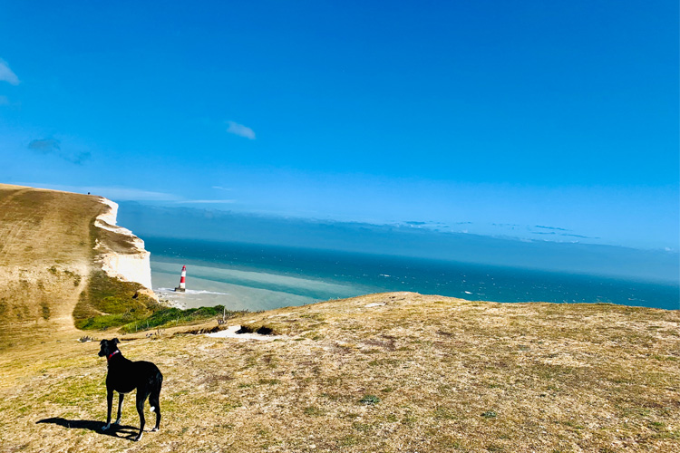 The Canine guide to Eastbourne