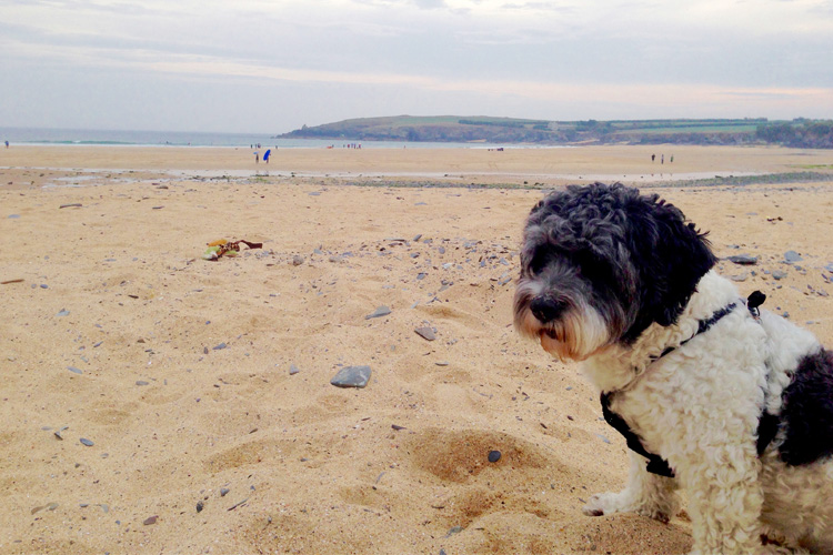 The Canine guide to Padstow