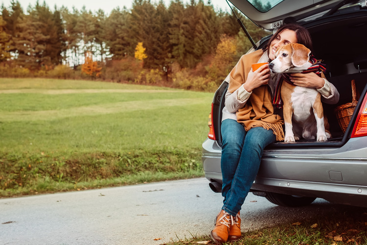 The Canine guide to Sussex