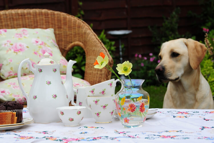6 of the UK's most dog-friendly afternoon teas