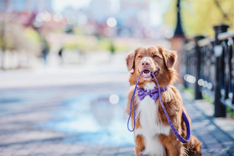 The UK's 8 most dog-friendly towns and cities
