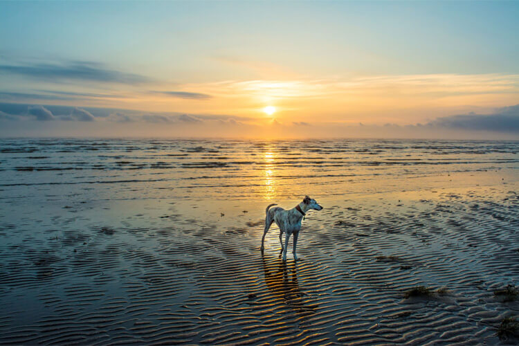 The best dog-friendly beaches in Lincolnshire