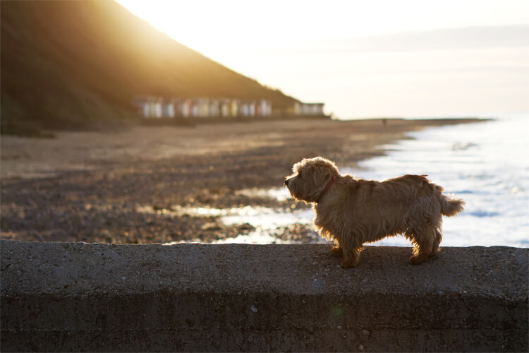 10 of the best dog-friendly beaches in Norfolk