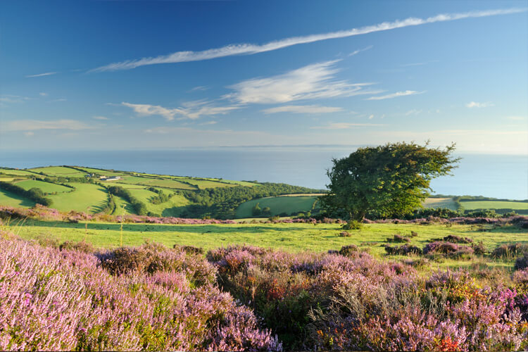 The Canine guide to Exmoor