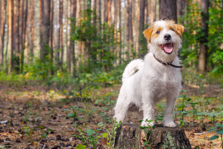 The Canine guide to the Forest of Dean