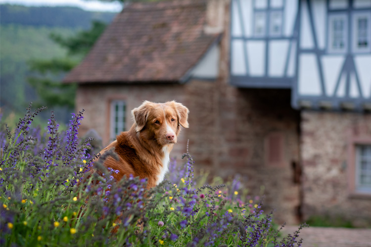 Dog-friendly National Trust properties with no restrictions