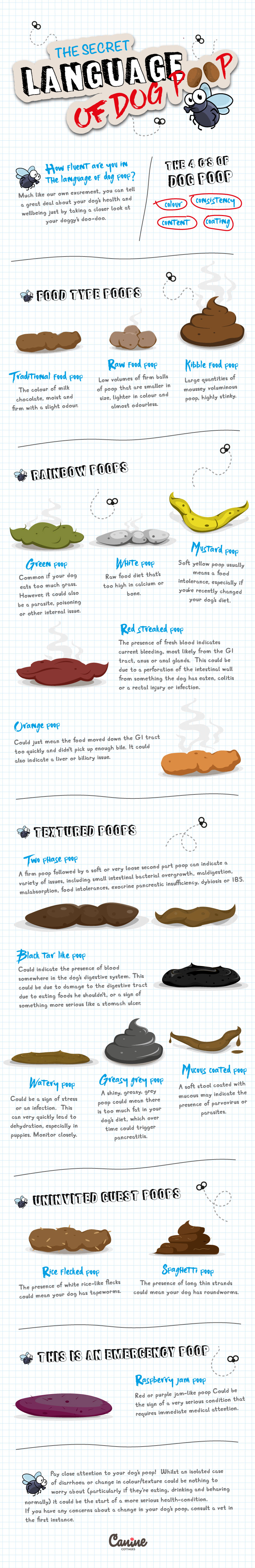 Infographic on the health of your dog's poop