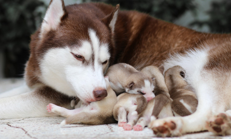 Mother and puppies bonding