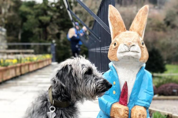 Peter Rabbit at Lingholm Kitchen and Walled Garden