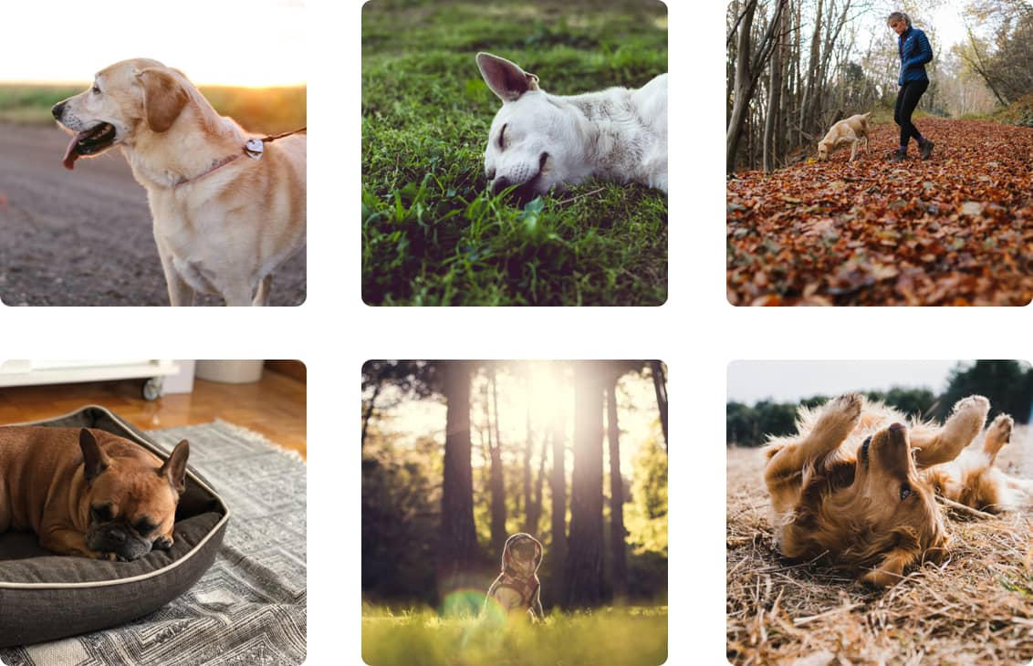 Follow Canine Cottages on Instagram