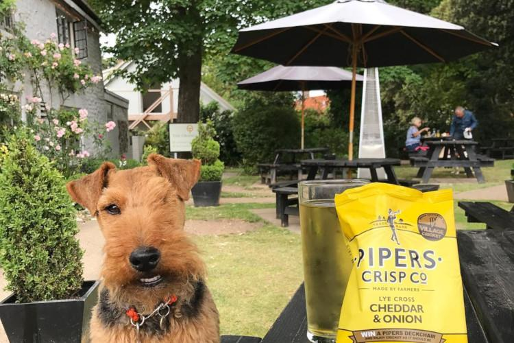 Dog beer garden The Orange Tree Thornham
