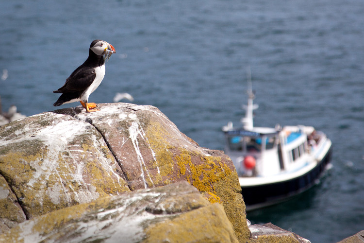 Boat trip to the Farne Islands
