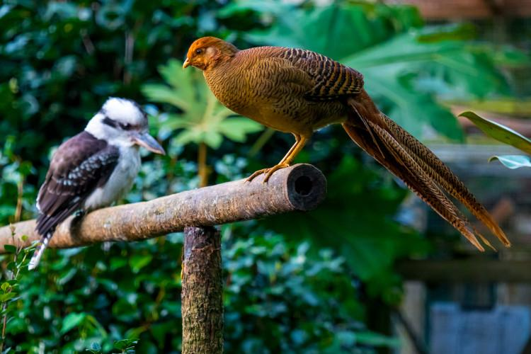 Abbotsbury birds