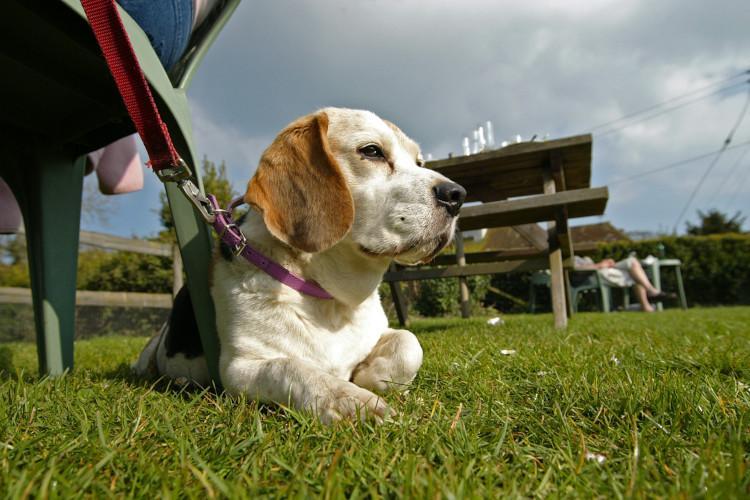 dog in pub beer garden