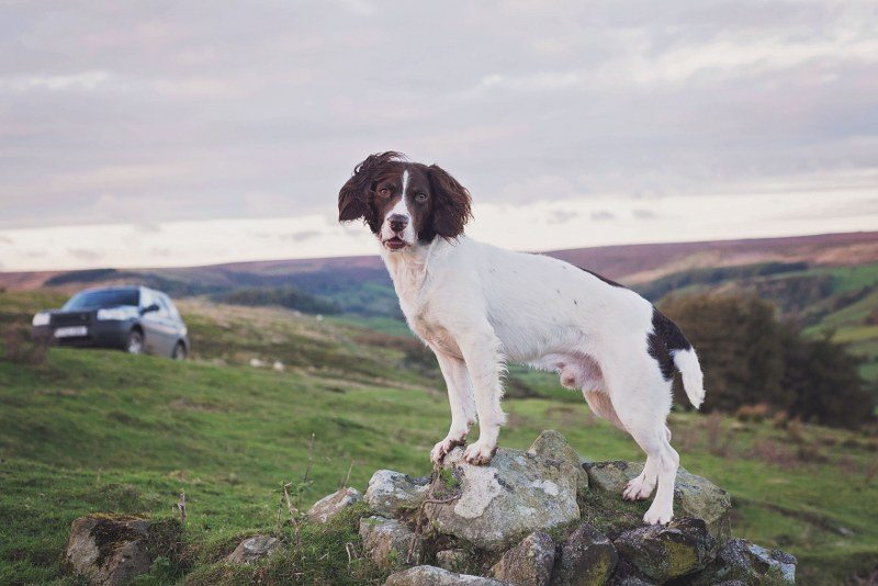 Alfie Bear's dog