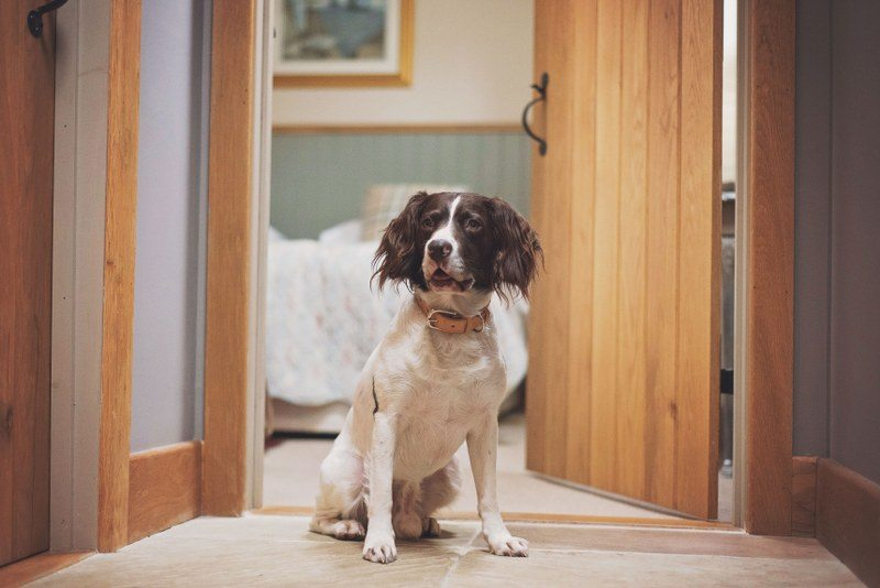 Doggies can join you on a weekend stay at Gales Lodge in the North York Moors