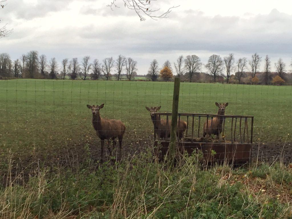 Hornby Deer Park