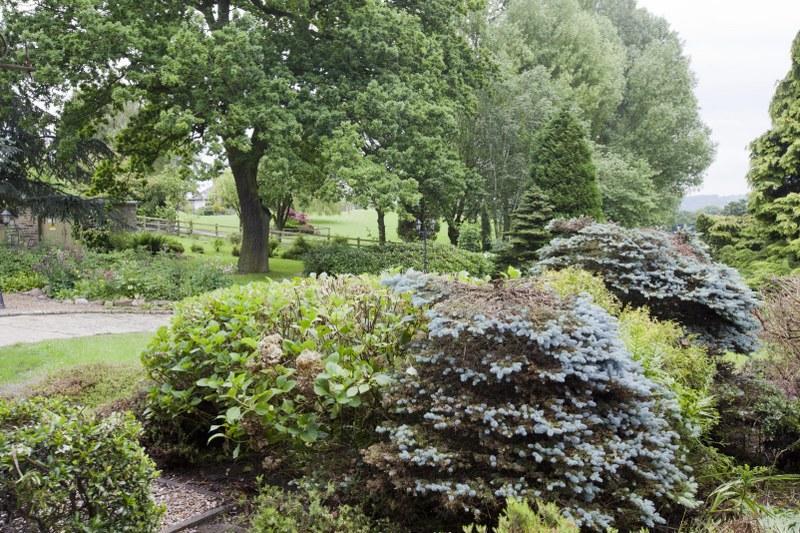 The Copse Garden