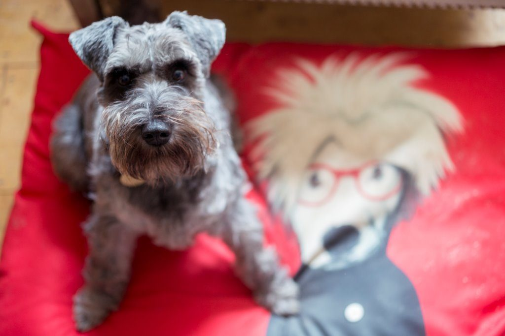 Consider dog-friendly touches in your holiday cottage