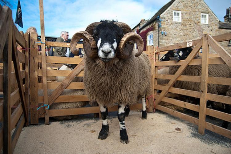 Masham Sheep Fair - Nidderdale events