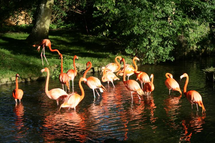 Flamingos at Birdland