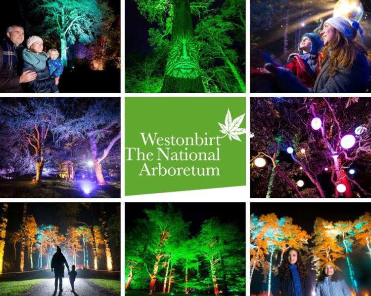 Westonbirt Arboretum's Enchanted Christmas
