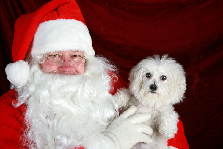 Santa Paws at Northwood House Christmas Fair