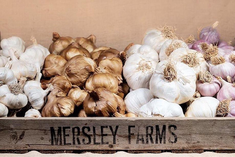 Fill your bags with a variety of garlic products at the IOW Garlic Festival