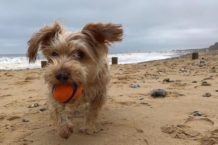 Dog on Mundesley Beach