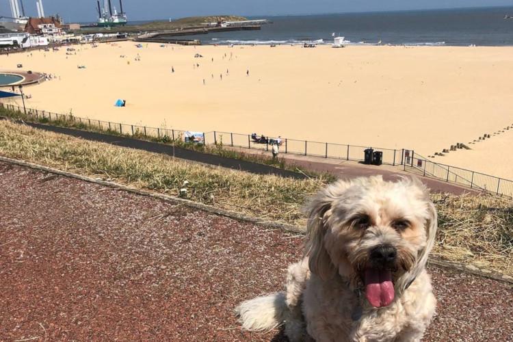 Dog on Gorleston Beach