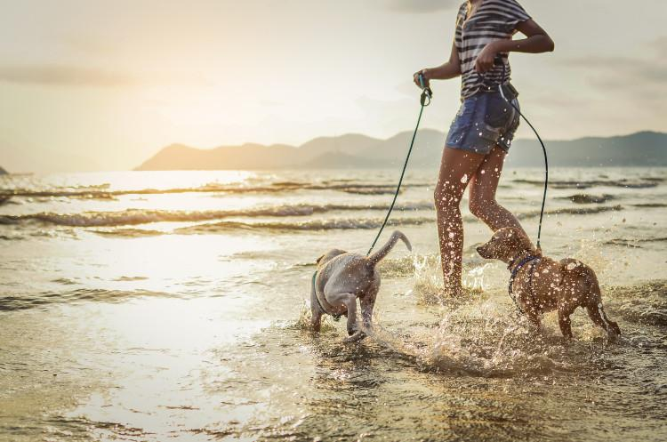 Dogs splashing in sea with owner
